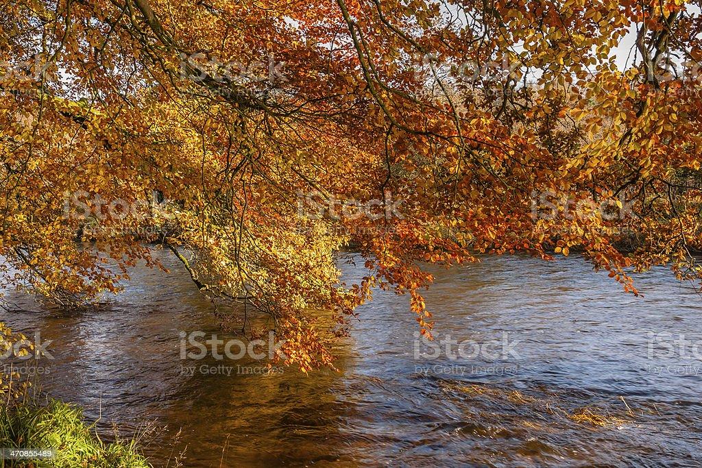 Autumn colours, riverside walk, November 2011 stock photo