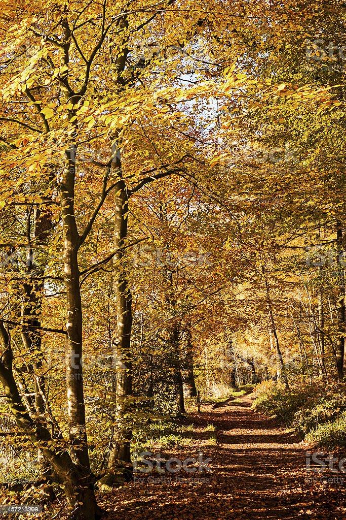 Autumn colours, riverside walk, November 2103 stock photo