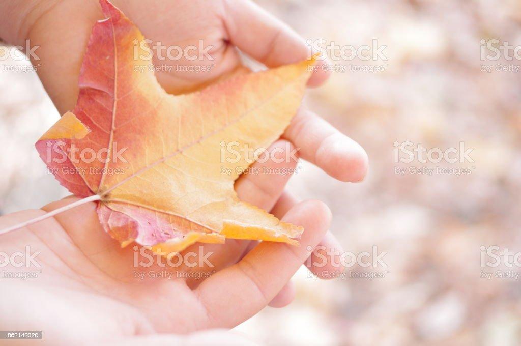 Autumn colours3 stock photo