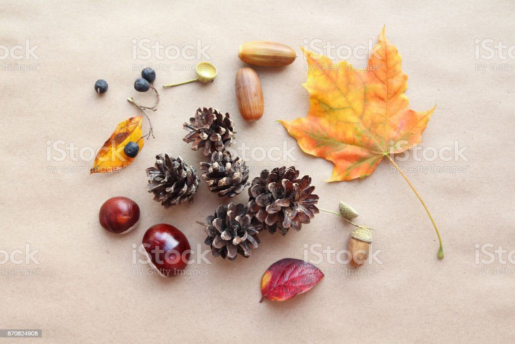 Autumn composition. Autumn maple leaf, cones, chestnuts, acorns and berries stock photo