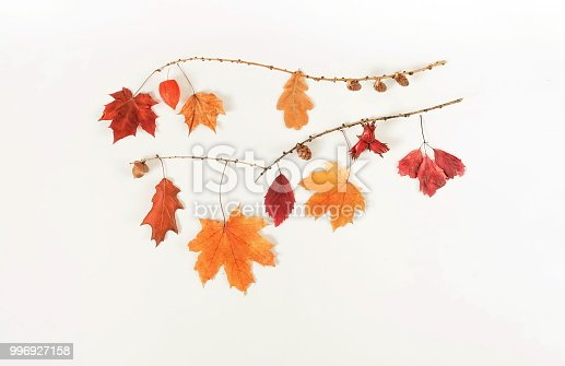 istock Autumn composition background. Flat lay, top view creative minimal mock up template.  Top view. Copy space 996927158