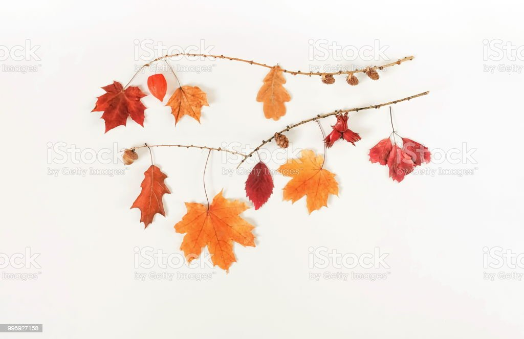 Autumn composition background. Flat lay, top view creative minimal mock up template.  Top view. Copy space stock photo