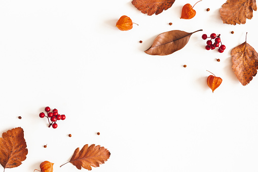 istock Autumn composition. Dried leaves, flowers, rowan berries on white background. Autumn, fall, thanksgiving day concept. Flat lay, top view, copy space 1163894271