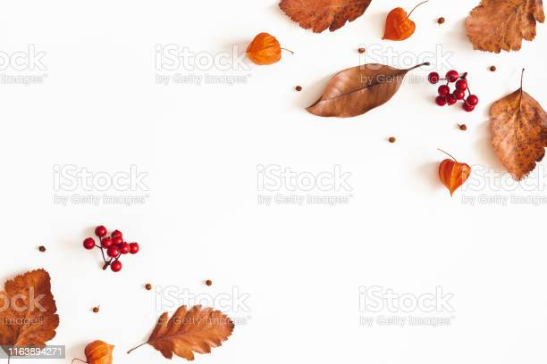 Autumn composition dried leaves flowers rowan berries on white fall picture id1163894271?b=1&k=6&m=1163894271&s=612x612&h=hkq2uvf2bisx3hiqr29rgqywm0bz8a  mciwdlds1yw=