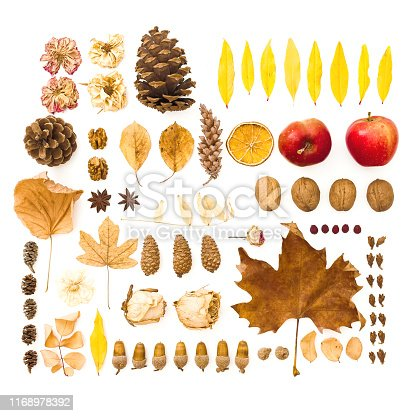 Autumn composition. Dried leaves, flowers, pine cones on white background. Autumn, fall, thanksgiving day concept. Flat lay, top view