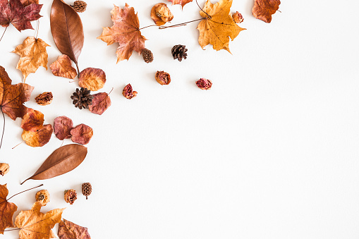 Autumn composition. Frame made of autumn dried leaves on white background. Flat lay, top view, copy space