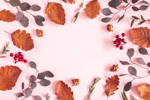 Autumn composition frame made of dried leaves flowers on pink autumn picture id1168259156?b=1&k=6&m=1168259156&s=612x612&w=0&h=r sxlsnf ku3sncfg atdm 5xqrwl9e2dig1db4cuku=