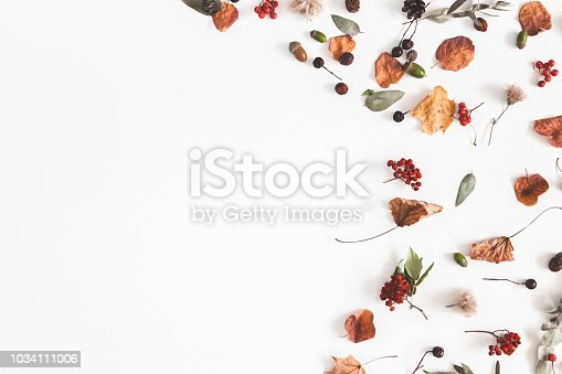 istock Autumn composition. Frame made of eucalyptus branches, rose flowers, dried leaves on white background. Autumn, fall concept. Flat lay, top view, copy space 1034111006