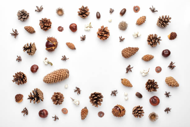 Autumn composition, frame made of pine cones, acorns and chestnuts. stock photo