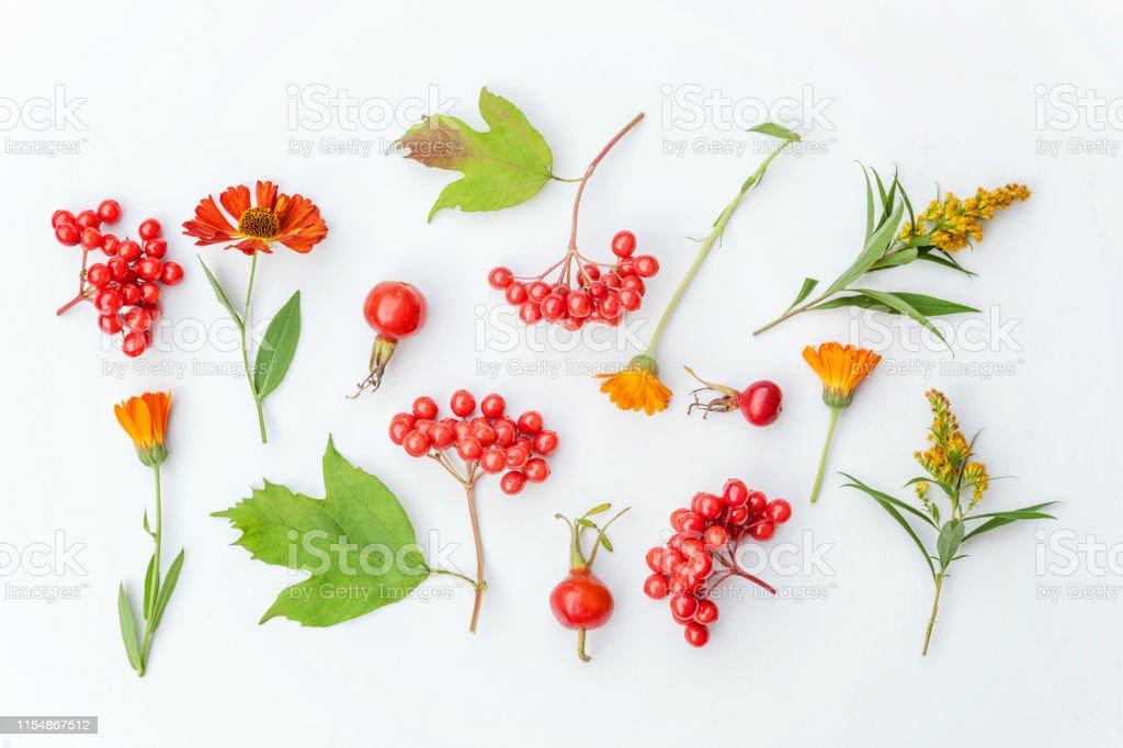 Autumn Composition Made Of Autumn Plants Viburnum Berries Dogrose