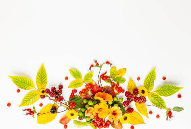 Herbstkomposition aus Blättern, Beeren auf weißem Grund. – Foto