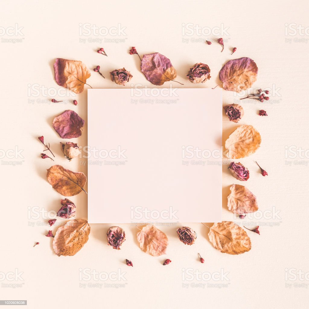 Autumn Composition Paper Blank Dried Flowers And Leaves On Pastel