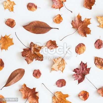 istock Autumn composition. Pattern made of dried autumn leaves on white background. Autumn, fall concept. Flat lay, top view, square 1019785970