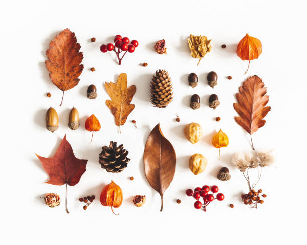 Autumn composition. Pattern made of dried leaves, flowers, berries on white background. Autumn, fall, thanksgiving day concept. Flat lay, top view stock photo