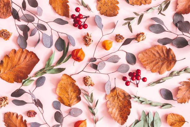 höst komposition. mönster av torkade blad, blommor på rosa bakgrund. höst koncept. platt lay, uppifrån, kopiera utrymme - komposition bildbanksfoton och bilder