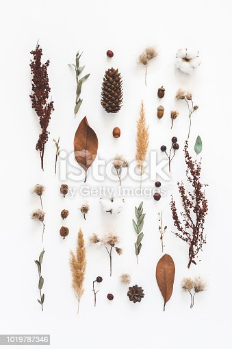 istock Autumn composition. Pattern made of eucalyptus branches, cotton flowers, dried leaves on white background. Autumn, fall concept. Flat lay, top view 1019787346