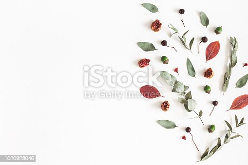 istock Autumn composition. Pattern made of eucalyptus branches, rose flowers, dried leaves on white background. Autumn, fall concept. Flat lay, top view, copy space 1020928046