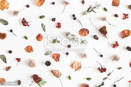 istock Autumn composition. Pattern made of eucalyptus branches, rose flowers, dried leaves on white background. Autumn, fall concept. Flat lay, top view 1032448842
