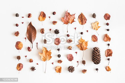 istock Autumn composition. Pattern made of flowers, dried leaves on white background. Autumn, fall concept. Flat lay, top view 1020928256