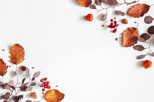 istock Autumn composition. Physalis flowers, eucalyptus leaves, rowan berries on gray background. Autumn, fall, thanksgiving day concept. Flat lay, top view, copy space 1170936915