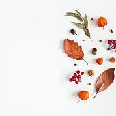 Autumn composition. Physalis flowers, eucalyptus leaves, rowan berries on white background. Autumn, fall, thanksgiving day concept. Flat lay, top view