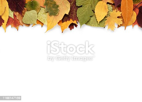istock Autumn composition with leaves on white background and empty space for text 1166147159