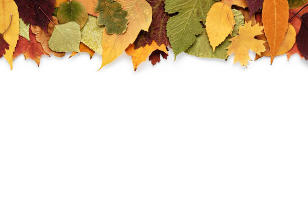 Autumn composition with leaves on white background and empty space for text Autumn composition with leaves on a white background and empty space for text fall leaves stock pictures, royalty-free photos & images