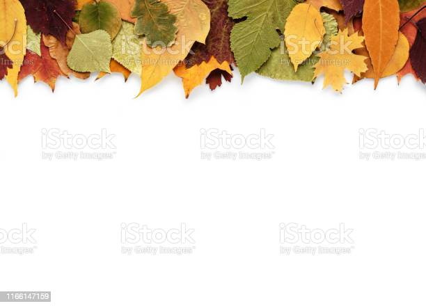 Photo of Autumn composition with leaves on white background and empty space for text