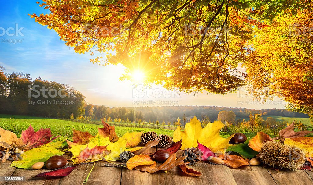 Autumn concept with leaves and landscape stock photo