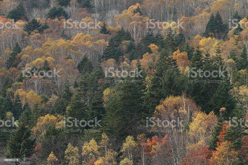 秋の雑木林 ストックフォト