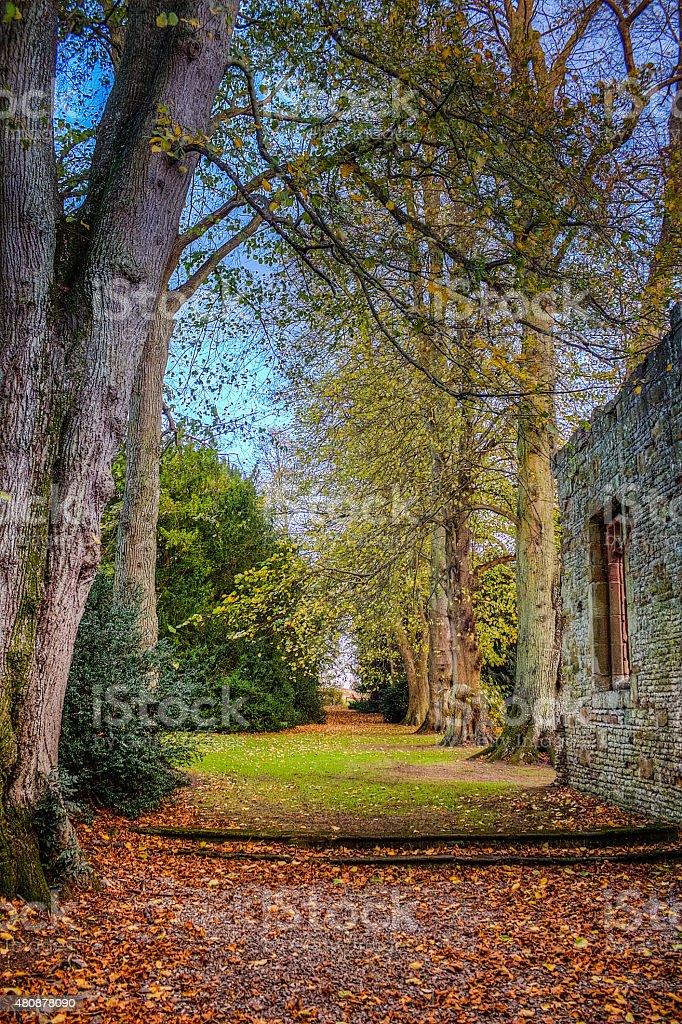 Corredor de otoño hojas de los árboles y - foto de stock