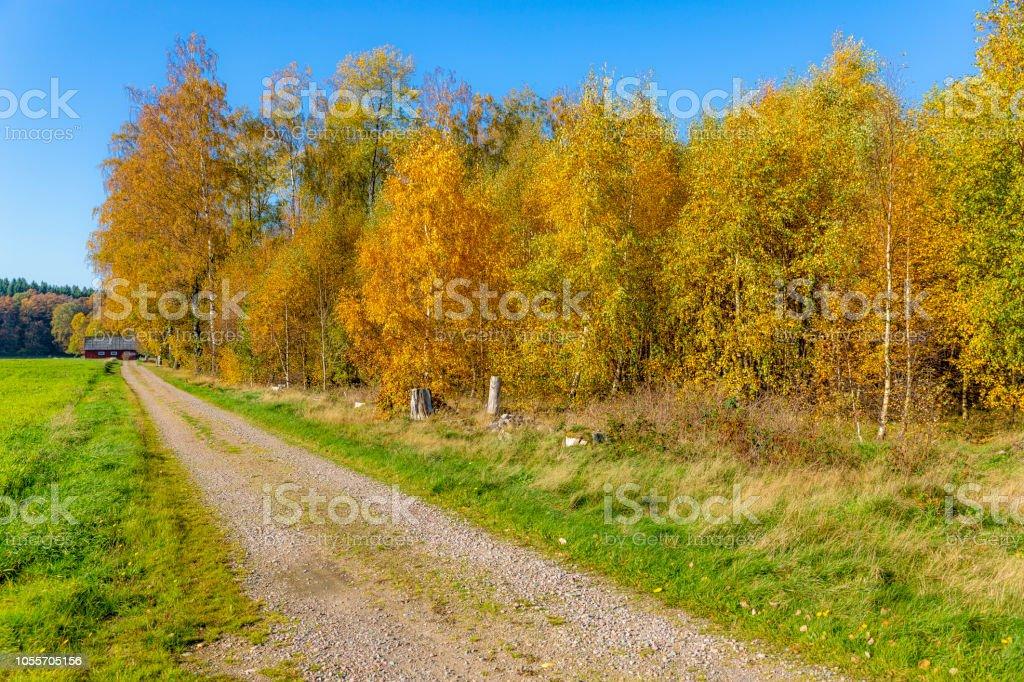Hösten landsväg bildbanksfoto