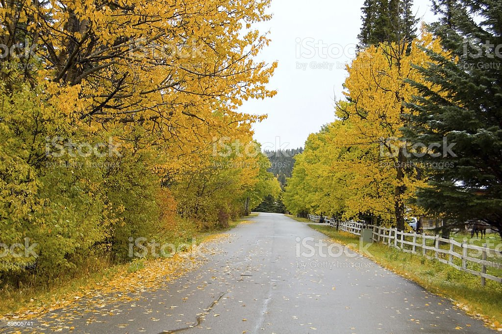 Autumn Country Road royalty-free stock photo