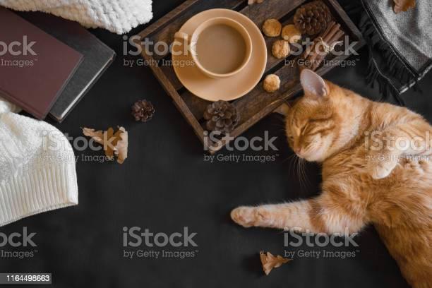 Autumn cozy composition with ginger cat picture id1164498663?b=1&k=6&m=1164498663&s=612x612&h= spvyrb8r rdkcolbzekcmucvrwjpbwuopxwhrh3hf0=