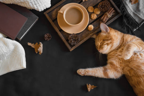 Autumn cozy composition with ginger cat picture id1164498663?b=1&k=6&m=1164498663&s=612x612&w=0&h=ktzap ssrblc74n58k9ottrqq5uf7v7qslp188rrtj4=