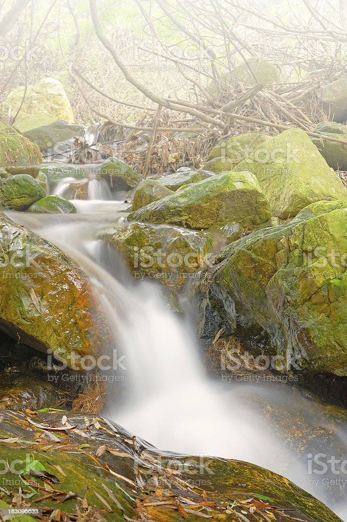 Autumn creek in forest royalty-free stock photo