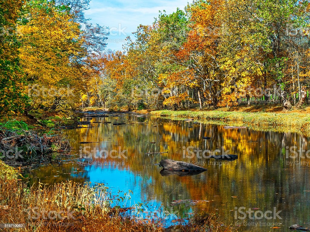 Autumn Creek Reflections stock photo