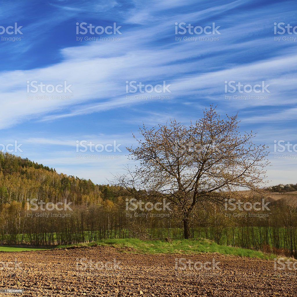 Autumn cultivated field at sunrise royalty-free stock photo
