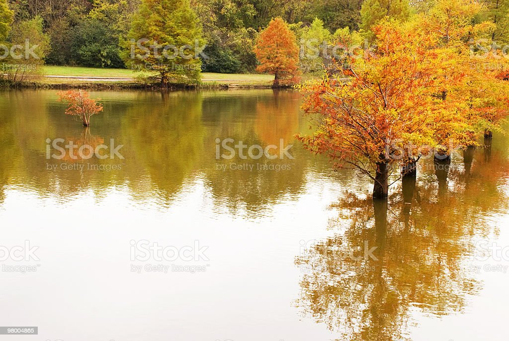 Autumn Cypress Trees Reflection At Creek royalty-free stock photo