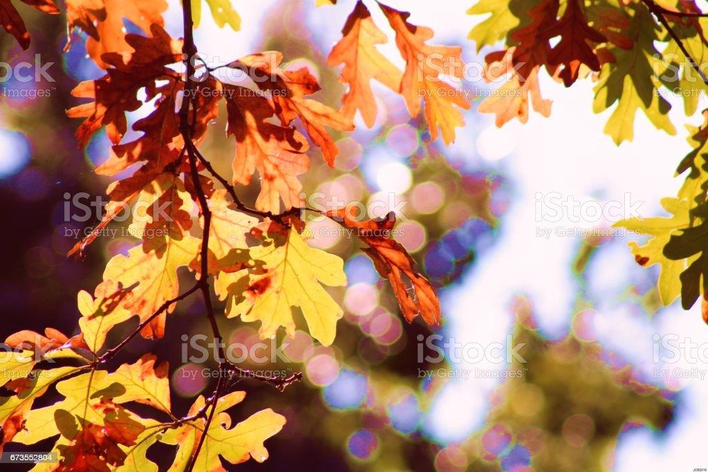 Autumn Dazzle royalty-free stock photo