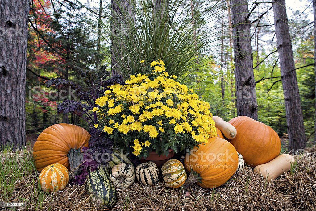 Autumn Decor in the Forest stock photo