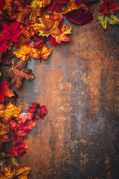 Autumn Decoration Background with Leafs stock photo