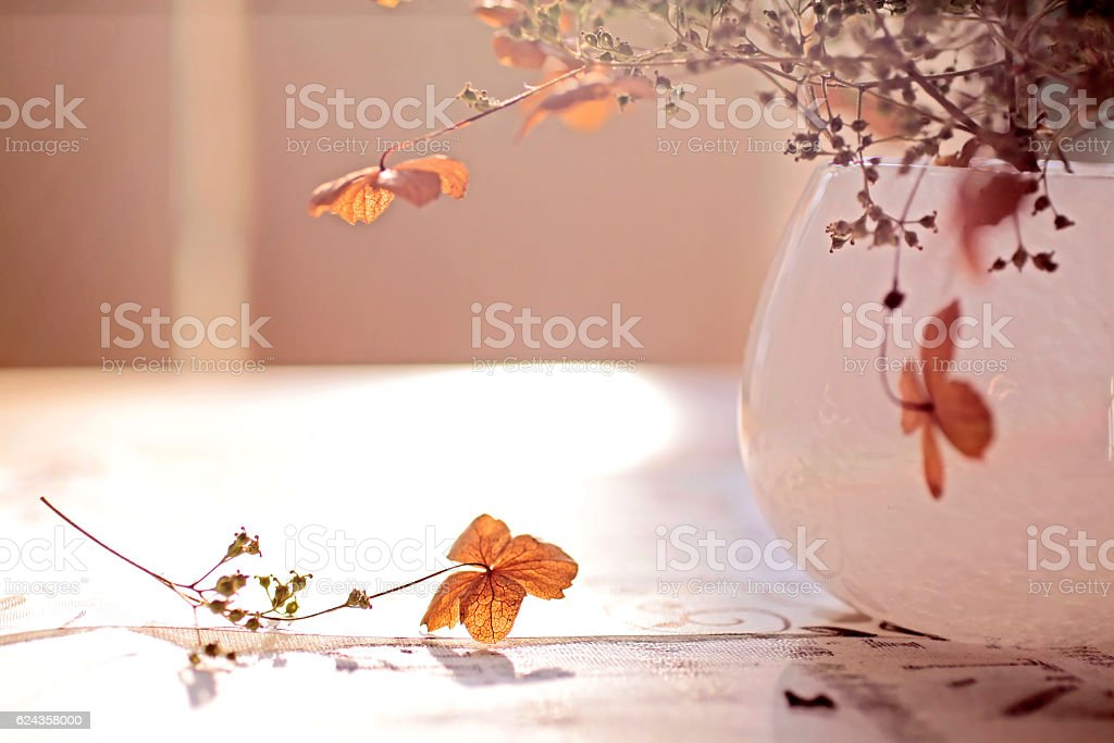 Autumn Decoration stock photo