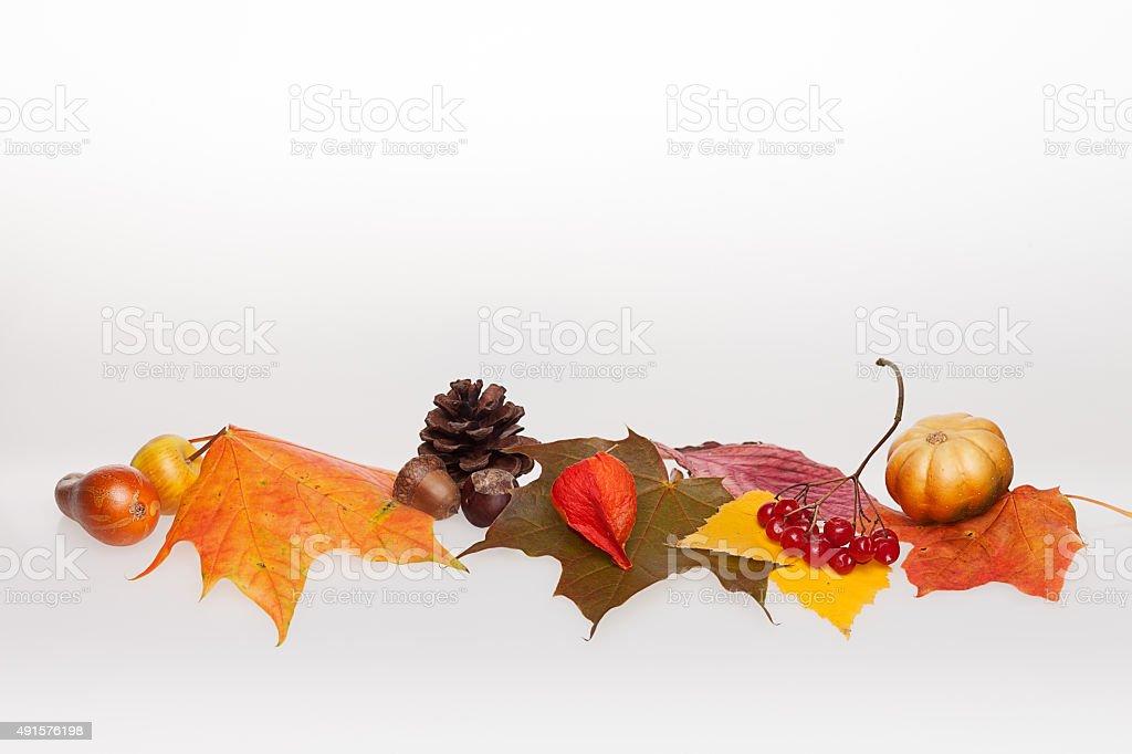 autumn decortaion stock photo
