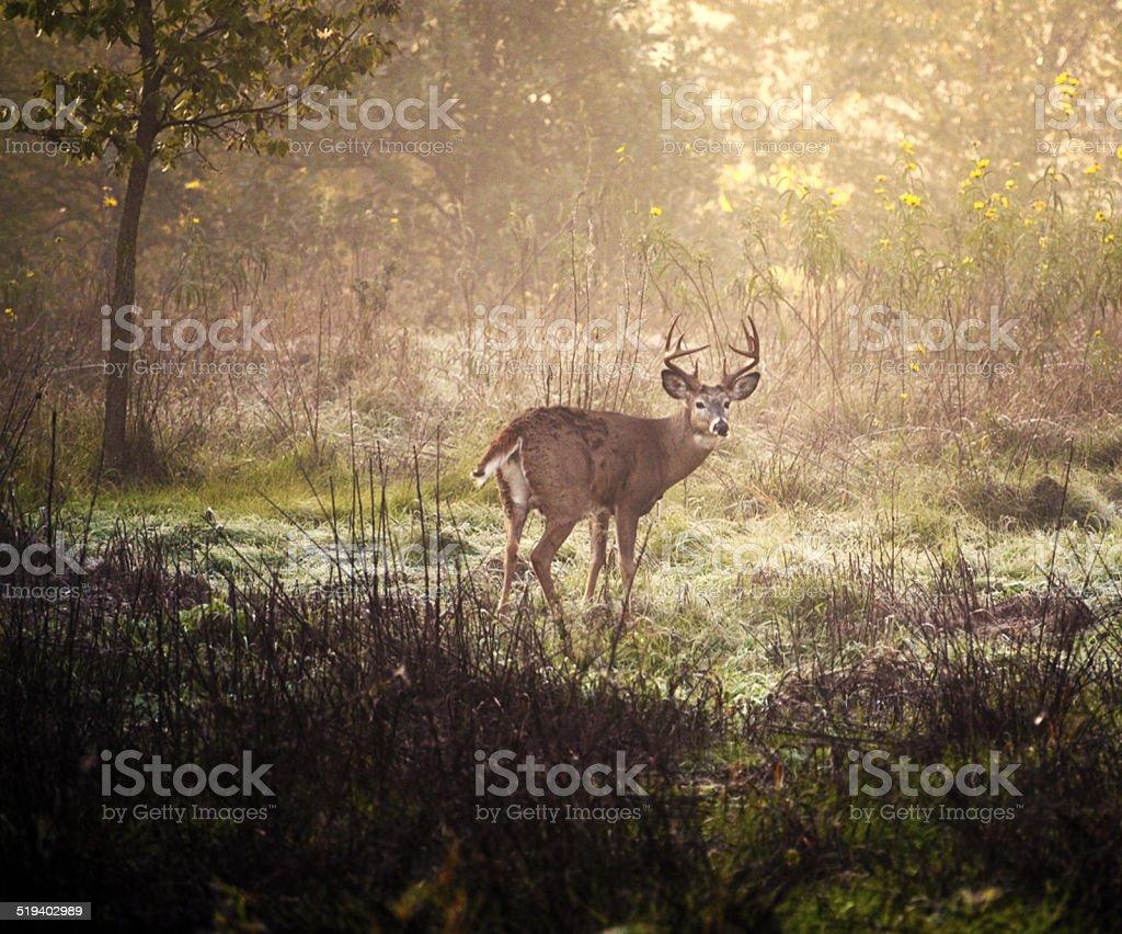 Autumn deer stock photo