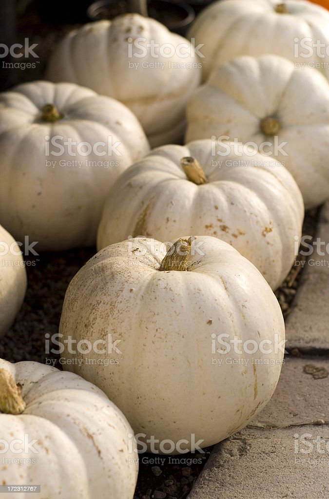 Autumn Display of White Pumpkins stock photo