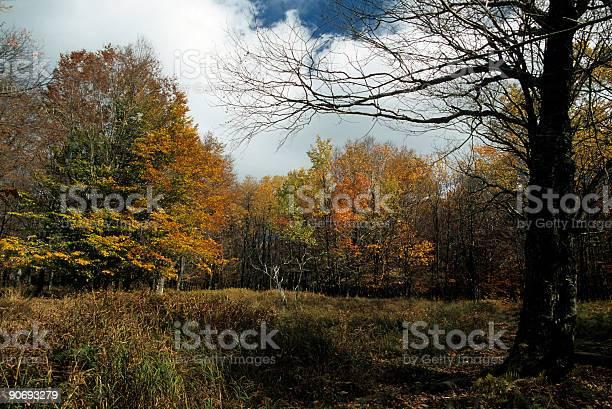 Autumn, Dolly Sods, Monongahela NF, WV