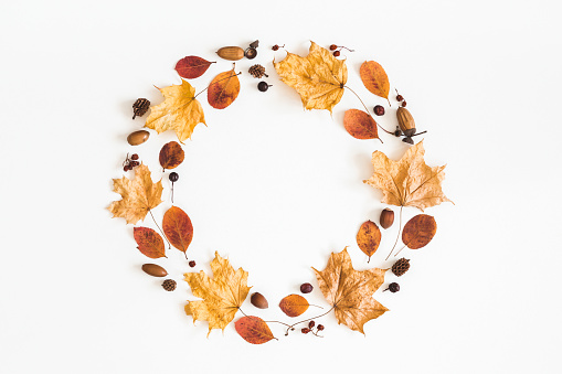 Autumn dried leaves, berries, acorns. Flat lay, top view
