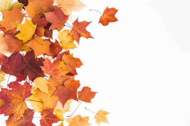hojas secas de otoño sobre fondo blanco. vista plana endecha, superior - fall leaves fotografías e imágenes de stock