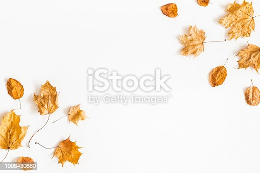 istock Autumn dried leaves on white background. Flat lay, top view 1006430860
